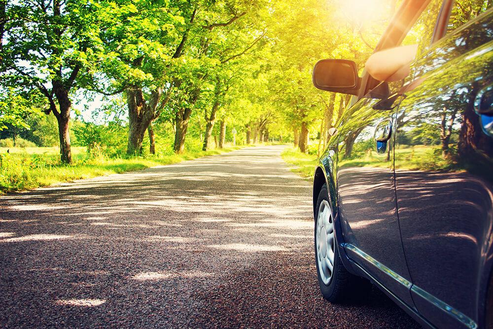 Auto su viale alberato